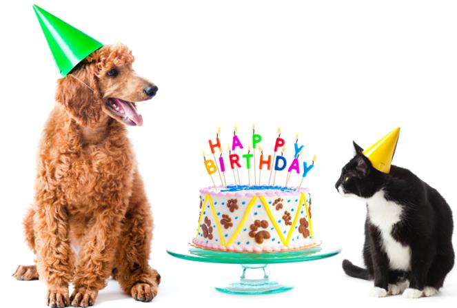 birthday cat and dog