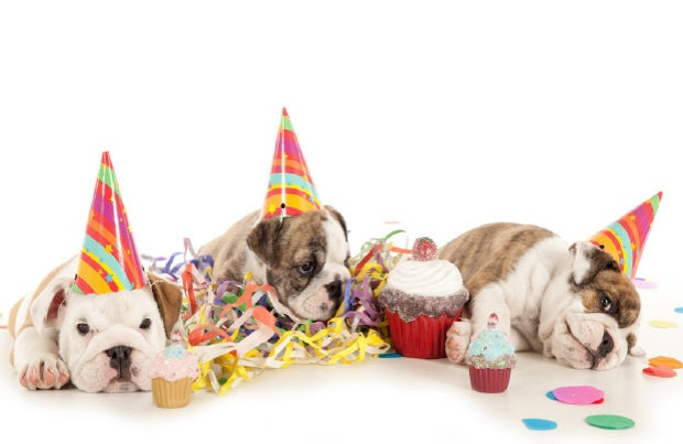 dog-birthday1
